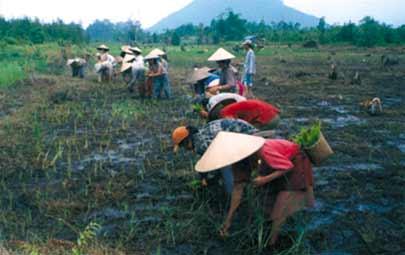 Indonesia Kekurangan 82 Juta Hektare Lahan Pertanian Potensi